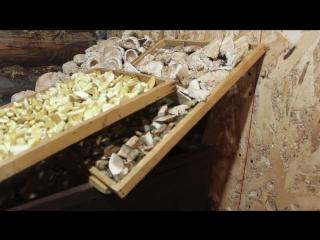 Самодельная чудо-сушилка для грибов