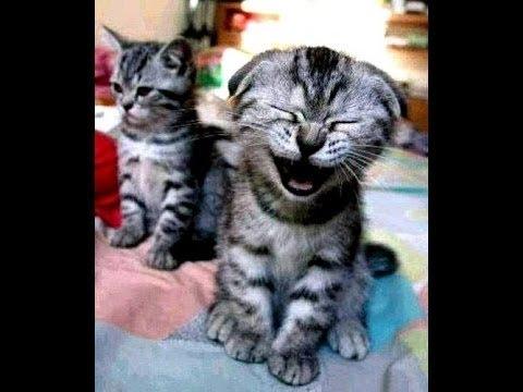عندما تعطس الحيوانات 😝 لقطات مضحكه