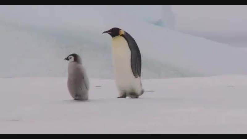 Лёля и Герман идут на прогулку