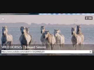 WILD HORSES - Edward Simoni