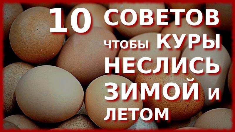 10 СОВЕТОВ ЧТОБЫ КУРЫ НЕСЛИСЬ ЗИМОЙ КАК ЛЕТОМ 1 Свободный выгул