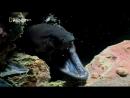 «Мурены: Чужая империя» (Документальный, природа, животные, 2010)
