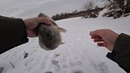 ВОТ ЭТО ЛАПОТЬ КЛЮНУЛ Крупный карась зимой Зимняя рыбалка на озере 2018