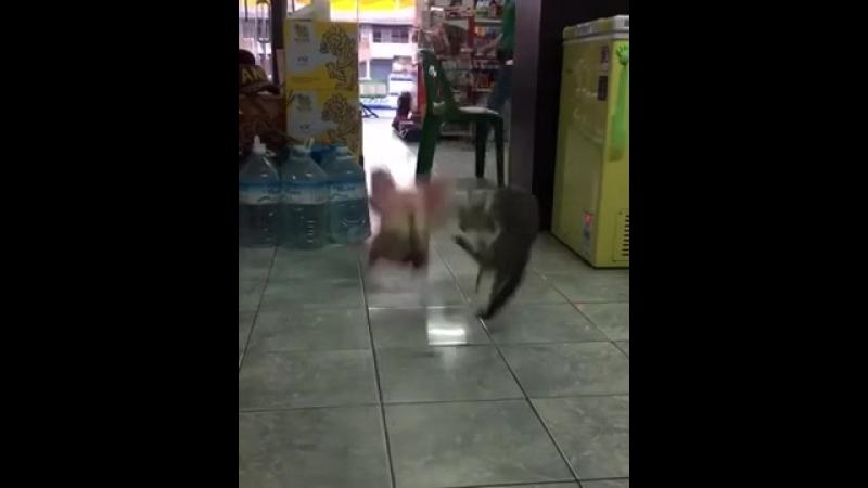 Кот_борцуха