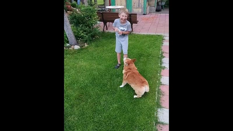 Стиль Лайф Васаби Сабик, 12 лет