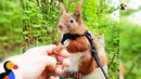 Squirrel Who Falls From Roof Finds Dad Who Won't Give Up on Him - TINTIN   The Dodo