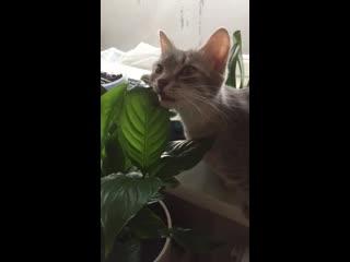 Наглая кошка