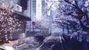 桜の下の街 The City Under The Cherry Tree Bare