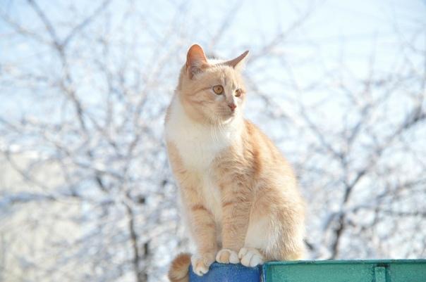 Ёжик Выходных Ёжик ждал очень - преочень. Только в воскресный день кот мог нормально поесть и немного поспать в тепле. Еще с утра он заходил на заснеженный двор, забирался на деревянный забор и