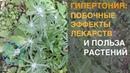 42 О Д Барнаулов Фитотерапия при гипертонии и атеросклерозе