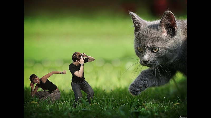 When cats attack- Cats are out to get us, I swear!