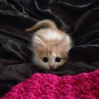 Кот Играющий-На-Флейте