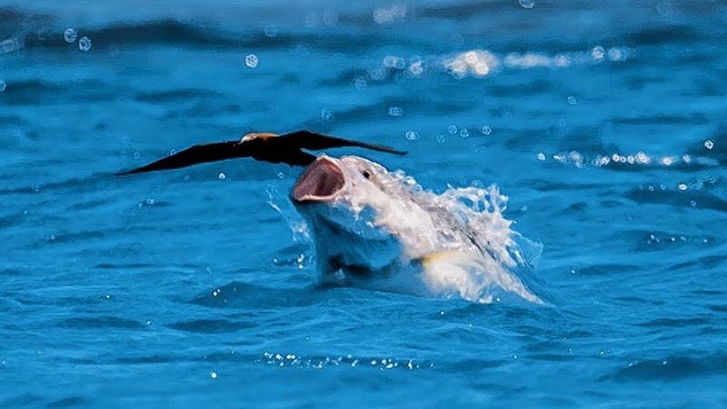 рыба охотится на птиц
