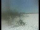 MOV0071A Грей и Дашка прогулка в полях.Уши Даше вылечили.