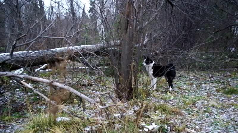 РЕЛ_Феня в лесу.