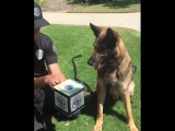 K9 Jack In The Box (VHS Video)