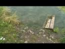 Очередной случай массовой гибели рыбы в Казани зафиксировали экологи