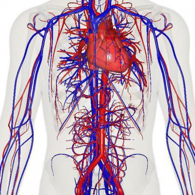 Болезни крови. Симптомы и лечение