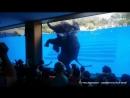 Купание слона Шоу слонов Тайланд Паттайя Зоопарк
