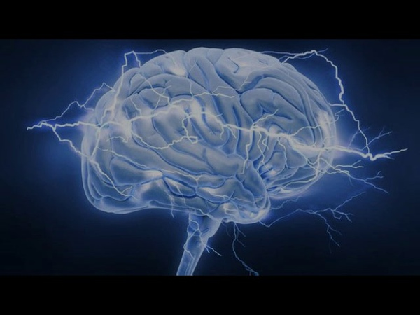 Эволюция мозга (рассказывает Филипп Хайтович) 'djk.wbz vjpuf (hfccrfpsdftn abkbgg [fqnjdbx)