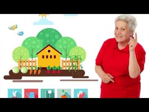 Голова садовая - Что сделать в теплице, после уборки огурцов