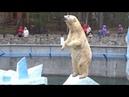Никакого цирка - жизнь научила! Герда позирует, медвежонок требует молока. 02.05.2016