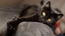 Платок батик Черный кот