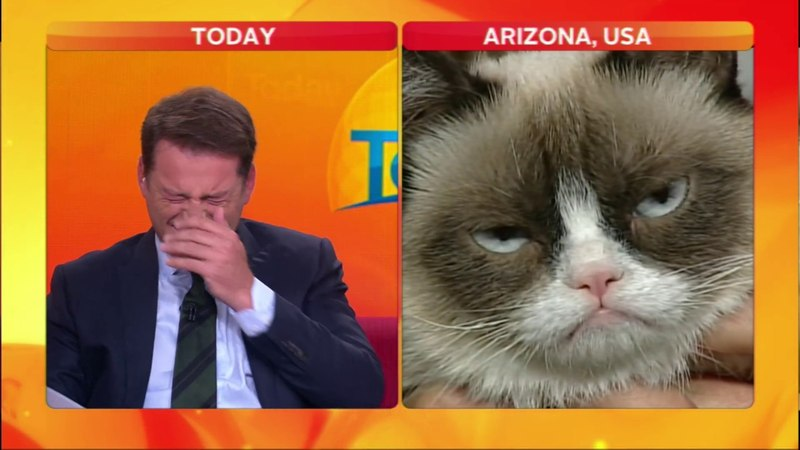 Reporter cant stop laughing at Grumpy Cat