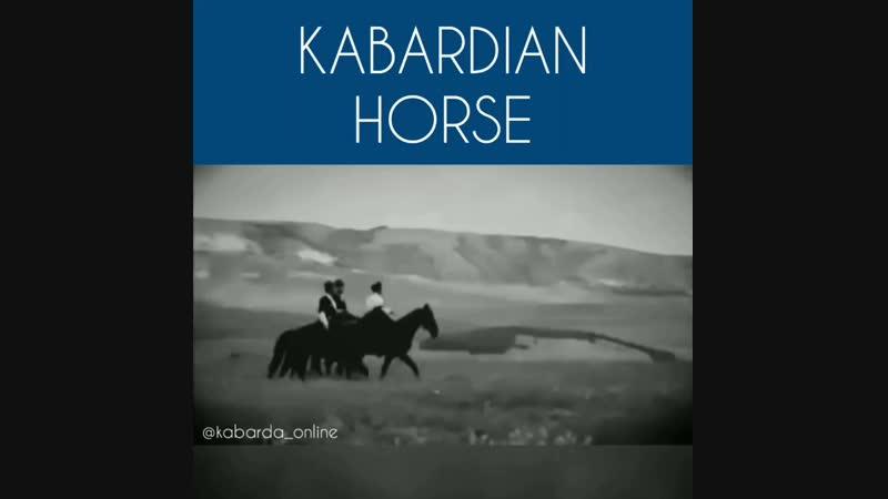 Kabardian horse / Кабарднская (черкесская) лошадь