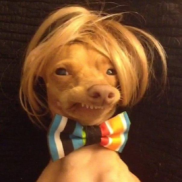 Милейший Тюна! :) Благодаря странно расположенным зубам и необычной мордочки, Тюна (Tuna) стал популярен в интернете. Очень милый пес строит разные мордочки, влюбляя в себя