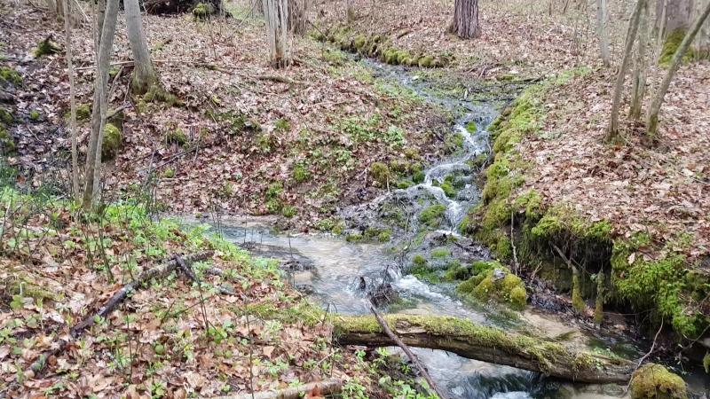 Место впадения родникового ручья в общий поток