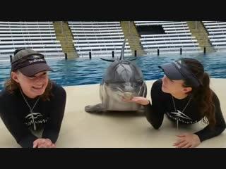 И дельфины могут веселиться