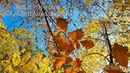 Autumn is a time for multicolored dreams 3 ✵ Beautiful piano music ✵ Instrumental piano