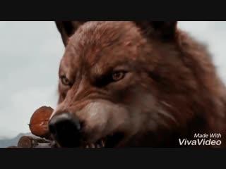 Edelweiss for a werewolf