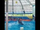 Шоу дельфинов. Тайланд