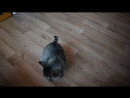 Котя попрошайка