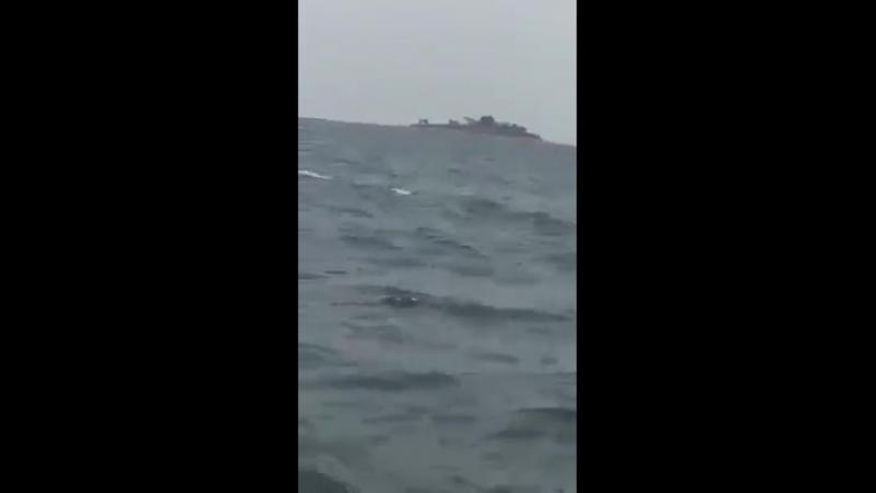Слоны в океане
