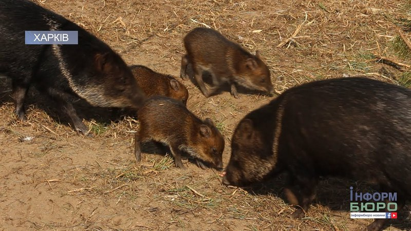 Весняне поповнення у Харківському зоопарку