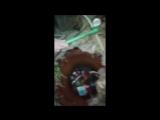 Школьники в Кимрах спасли ёжика