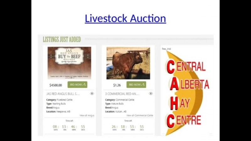 Farmland for sale Cattle market Cattle Auctions Livestock Auction Cattle for Sale