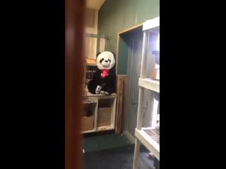 Сказал на работе, что боится панд
