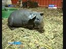 Контактные зоопарки в торговых центрах Ивановской области вне закона