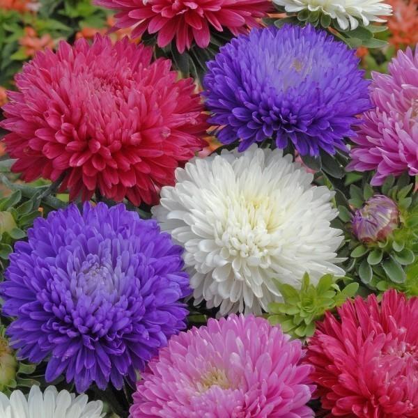 Цветы должны быть без повода,