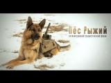 Трейлер к фильму «Пес Рыжий»