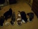 Котишки ужинают