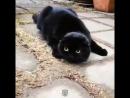 Кошки - Мы разные и смешные