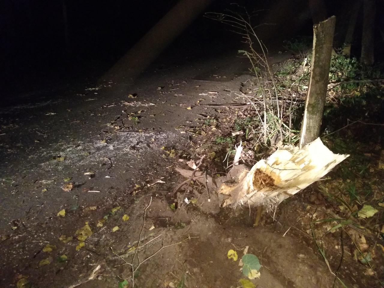 Три человека пострадали в аварии в лесу — Изображение 1