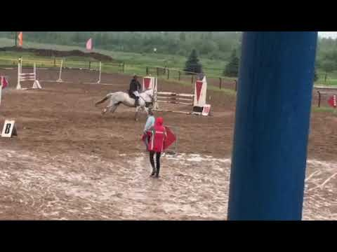 23– Sale – show jumping mare_2008_level 150 cm
