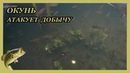 ОКУНЬ атакует Съёмки под водой SjCam 4000 UNDERWATER