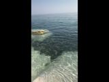 alina_ts video